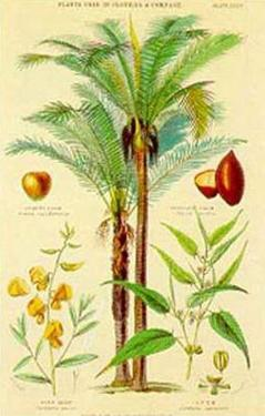 Plants Used in Clothing by William Rhind