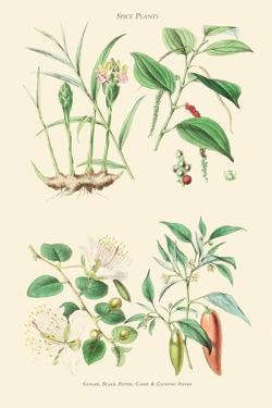 Spice Plants. Ginger, Black Pepper, Caper, Cayenne Pepper by William Rhind