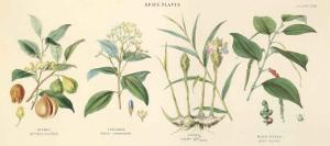 Spice Plants I by William Rhind