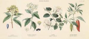 Spice Plants II by William Rhind