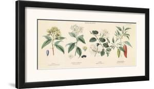 Spice Plants II by William Rhind