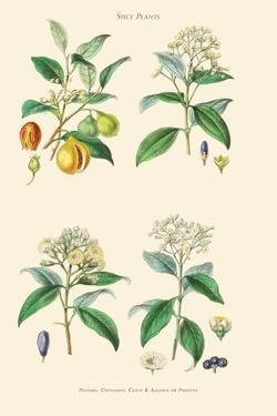 Spice Plants. Nutmeg, Cinnamon, Clove, Allspice or Pimento by William Rhind