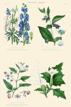 Vegetable Poisons. Wolf's Bane or Monk's Hood, Deadly and Woody Nightshade, Thorn or Jimson Apple by William Rhind