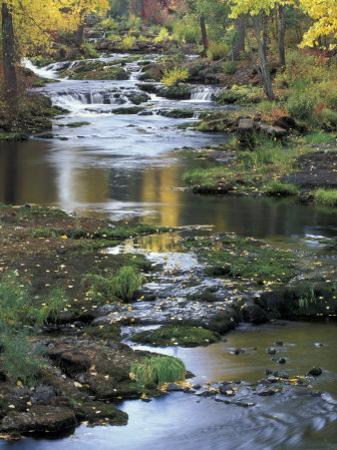 Autumn Color on Stream, Trout Lake, Washington, USA by William Sutton