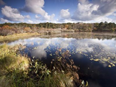 Cape Cod Wetlands, Massachusetts, USA by William Sutton
