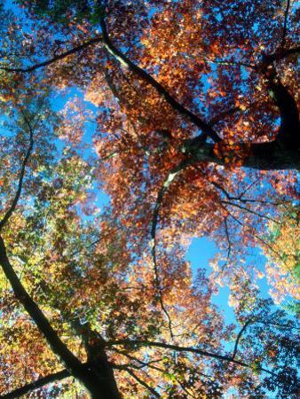 Fall Color, Washington, USA by William Sutton