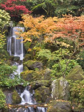 Heavenly Falls and Autumn Colors, Portland Japanese Garden, Oregon, USA by William Sutton