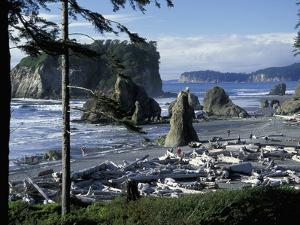 Ruby Beach, Olympic National Park, Washington, USA by William Sutton