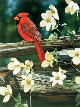 Cardinal by William Vanderdasson