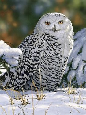 Snowy Owl by William Vanderdasson
