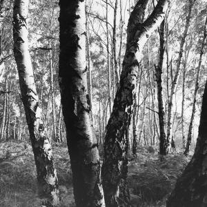 Epping Forest by William Vanderson