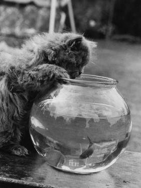 Feline Fishing by William Vanderson