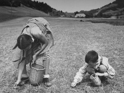 Farm Children Gleaning Field After Wheat Harvest