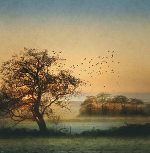 Good By Day Birds by William Vanscoy