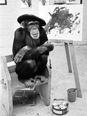 Artist Chimp 1955 by Williams