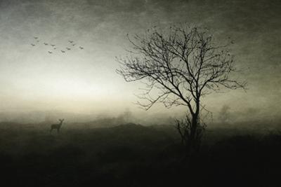 Dawn.......... by Wim Schuurmans