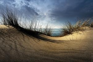 Dunes by Wim Schuurmans