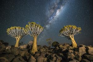 Quiver Tree Forest (Aloe Dichotoma) at Night with Stars and the Milky Way, Keetmanshoop, Namibia by Wim van den Heever