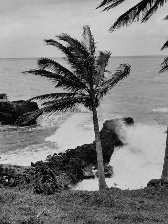 https://imgc.allpostersimages.com/img/posters/wind-blowing-the-palm-trees-and-the-waves-pounding-on-the-jamaica-coastline_u-L-P767J10.jpg?p=0