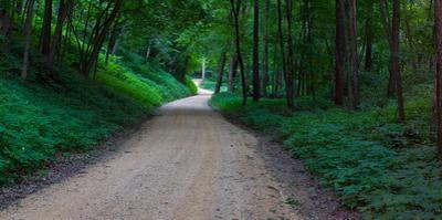 Winding road through a forest near Cassville, Grant County, Wisconsin, USA