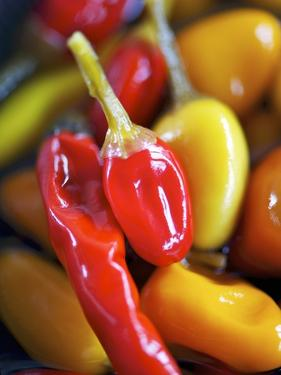 Various Chillies by Winfried Heinze