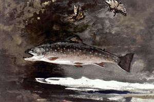 Homer: Trout, 1889 by Winslow Homer