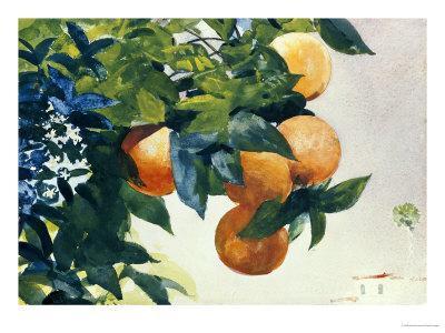 Oranges on a Branch, 1885