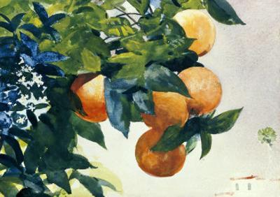 Oranges on a Branch, 1885 by Winslow Homer