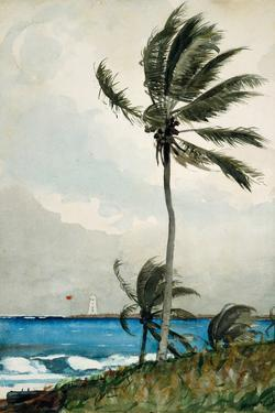 Palm Tree, Nassau, 1898 by Winslow Homer