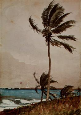 Palm Tree, Nassau by Winslow Homer