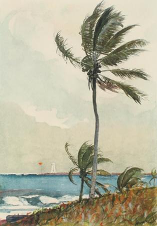 Palm Tree, Nassau by Winslow Homer