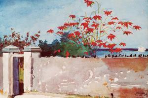 Wall, Nassau, c.1898 by Winslow Homer