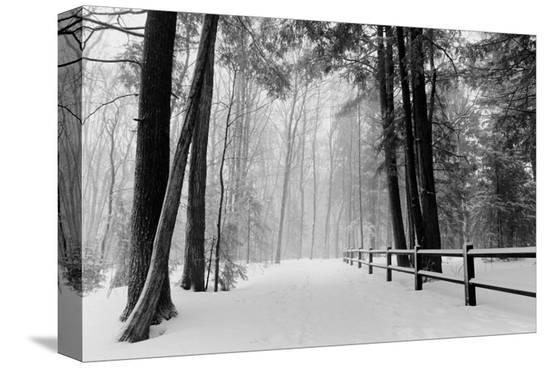 Winter Country Lane, Michigan--Stretched Canvas