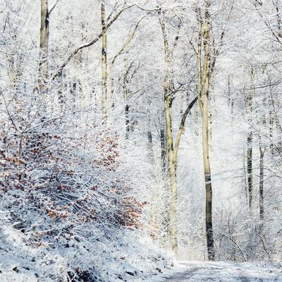 https://imgc.allpostersimages.com/img/posters/winter-in-the-teutoburg-forest_u-L-Q1EXL1U0.jpg?artPerspective=n
