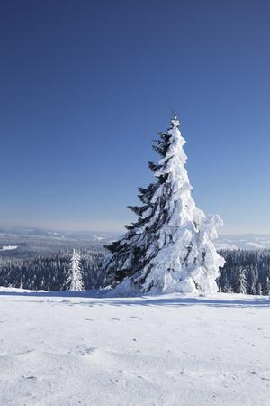 https://imgc.allpostersimages.com/img/posters/winter-scenery-at-the-kandel-black-forest-baden-wurttemberg-germany_u-L-Q1EY5RP0.jpg?artPerspective=n