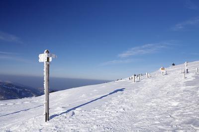 https://imgc.allpostersimages.com/img/posters/winter-scenery-on-the-belchen-belchenrundweg-black-forest-baden-wurttemberg-germany_u-L-Q1EY4BL0.jpg?artPerspective=n