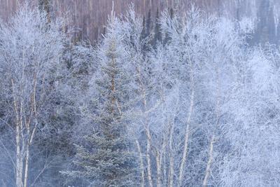 https://imgc.allpostersimages.com/img/posters/winter-scenic-near-fairbanks-alaska_u-L-Q1D09RM0.jpg?p=0