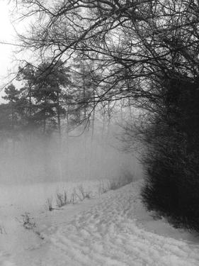 Winter Snow and Fog