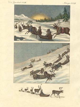 https://imgc.allpostersimages.com/img/posters/winter-trips-in-lapland_u-L-PVQBPT0.jpg?p=0