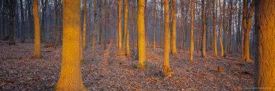 https://imgc.allpostersimages.com/img/posters/winter-woodland-england-uk-europe_u-L-P2QWQL0.jpg?p=0