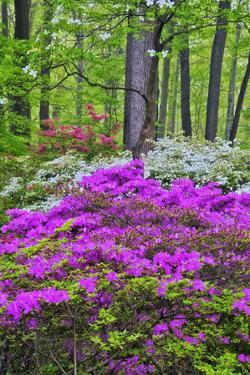 Winterthur Gardens, Delaware, USA