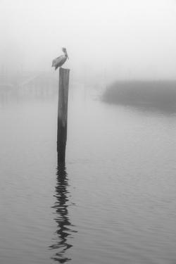 On Pelican Marsh by Winthrope Hiers