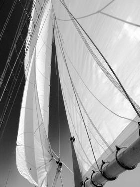 Sailboat Sails Florida by Winthrope Hiers