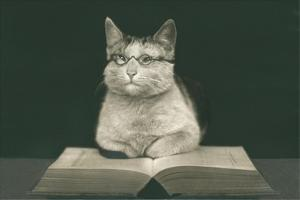 Wise Cat Reading Book