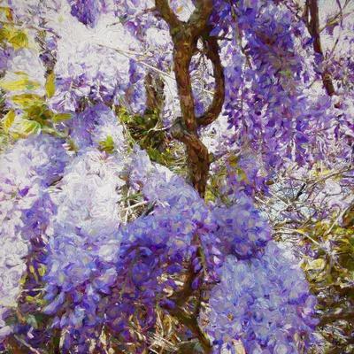 https://imgc.allpostersimages.com/img/posters/wisteria-2018_u-L-Q1GTWHG0.jpg?artPerspective=n