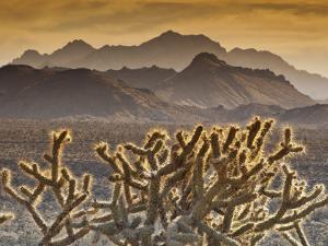 Cholla Cacti with Providence Mountains, Mojave National Preserve by Witold Skrypczak