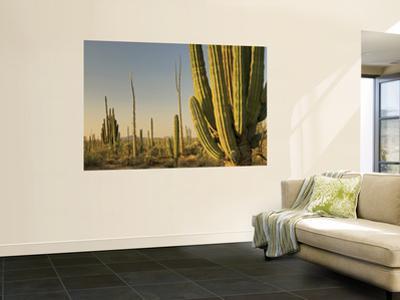 Cirio Trees and Cardon Cacti Near Catavina