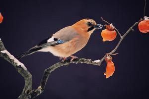 Bird by WizData