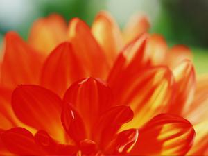 Flower by WizData