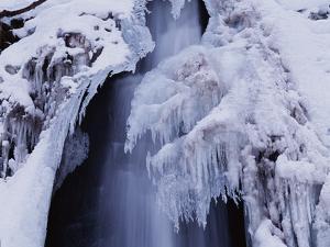 Freeze by WizData